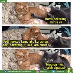 7 Percakapan dan Ekspresi Kucing Ini Nyindir Kalakuan Manusia..Nampol Banget!