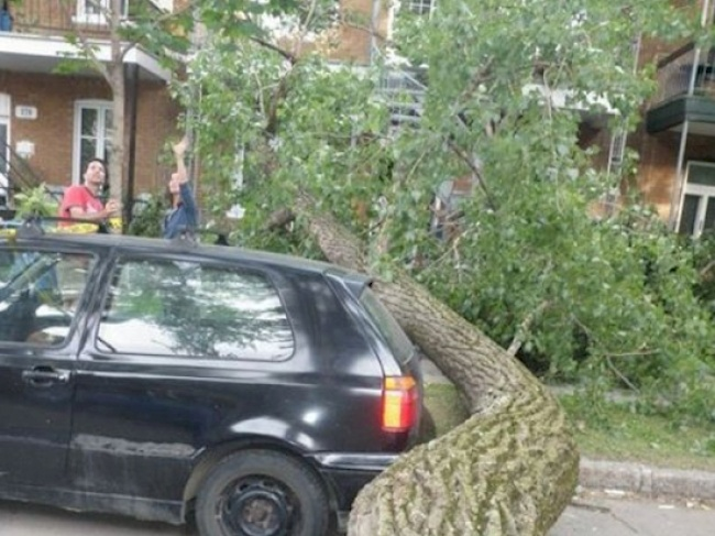 Untungnya mobil dan pengemudi serta penumpangnya di dalam masih selamat. Hanya sekian sentimeter aja mereka terhindar dari pohon yang tumbang.