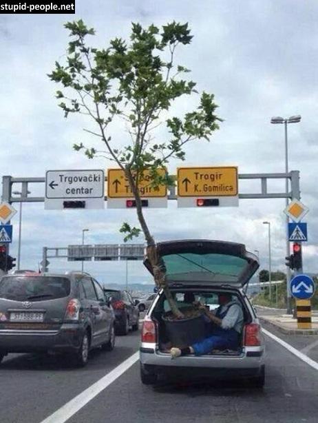 Nah lo, gimana tuh kira-kira kalau pas lagi muat pohon tinggi ada rambu-rambu tinggi di jalanan?. Bingung kan?. Makanya Pulsker jangan maksain deh kalau mobil kita nggak bisa muat barang-barang sekaligus. Bisa bahaya bagi diri kita dan orang lain. Dan tetap patuhi aturan lalu lintas serta bijak dalam berkendara ya.