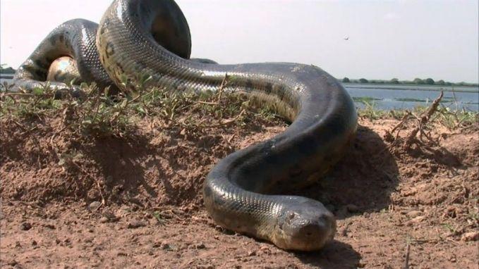 Ular memang termasuk hewan yang menakutkan, tapi jika ketakutanmu dengan ular bikin kamu teriak dalam hati, berarti kamu mengidap ophidiophobia.