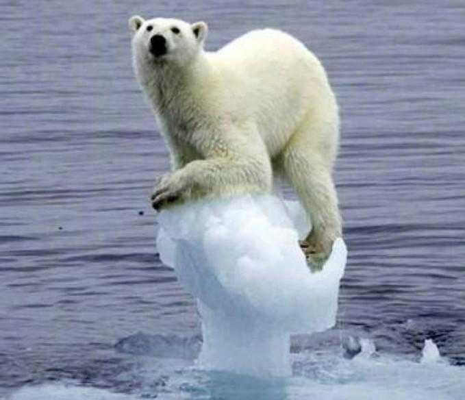Pemanasan global dan perubahan iklim secara ekstrim membuat es di kutub semakin mencair. Akibatnya hewan disana mulai mengalami kesulitan untuk hidup gengs. Seperti yang ditunjukkan beruang kutub ini.