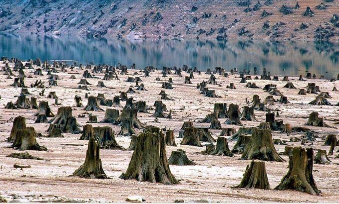 Dan akibat industri yang semakin maju terkadang manusia lupa memperhatikan kondisi alamnya. Demi mendapatkan sejumlah uang, hutan yang dulunya asri kini menjadi sebuah lahan tandus.