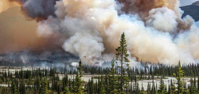 Fotografer lainnya Sara Lindstrom mengabadikan detik-detik saat hutan di wilayah Alberta dilalap api. Kebakaran ini telah memberangus sebagian hutan akibat kemarau berkepanjangan.