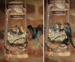 Bukan Pohon, Burung-burung Ini Memilih Bersarang di Tempat Tak Biasa