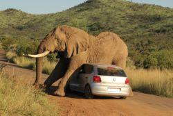7 Foto Mengenaskan Saat Mobil Tertimpa Sial