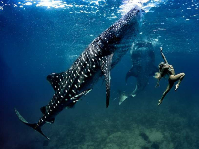 Menari bersama hiu tutul, gimana rasanya ya?.