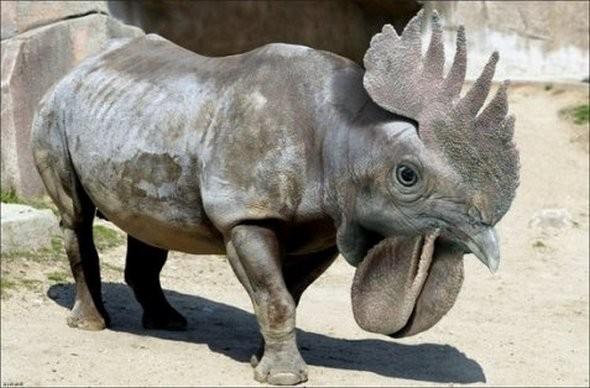Hasil kloning gen ayam dan badak, jadilah hewan hybrid kayak gini.