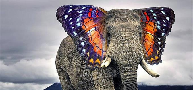 Wah, keren juga ya kalau kupu-kupu digabung sama gajah.