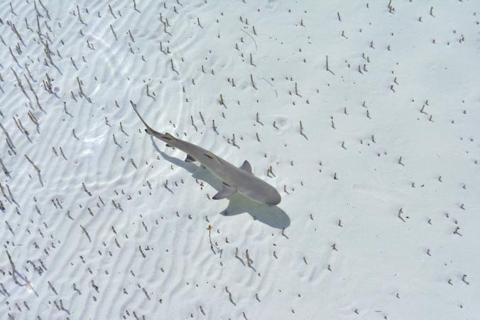 Annie Guttridge menangkap momen-momen unik saat seekor anak hiu berenang di atas pasir putih. Seolah nampak melayang.