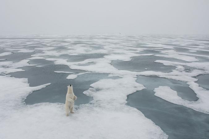Dan fotografer David Sinclair mengabadikan seekor beruang kutub yang sedang berdiri di habitatnya di Svalbard. Keren kan Pulsker?. Emang ya gaes, kita ternyata nggak ada apa-apanya dibanding alam semesta yang menakjubkan ini.