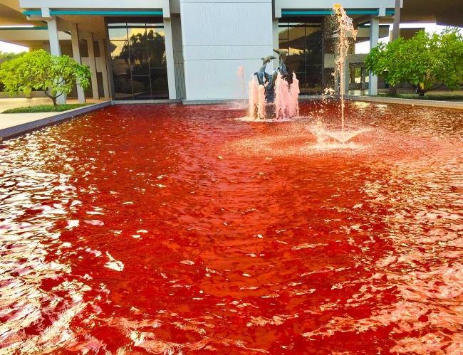 Sebenarnya kolam ini dibuat untuk mensuport pejuang kanker payudara, tapi akhirnya malah terlihat seperti scene dalam film horor yaitu kolam yang penuh dengan darah.