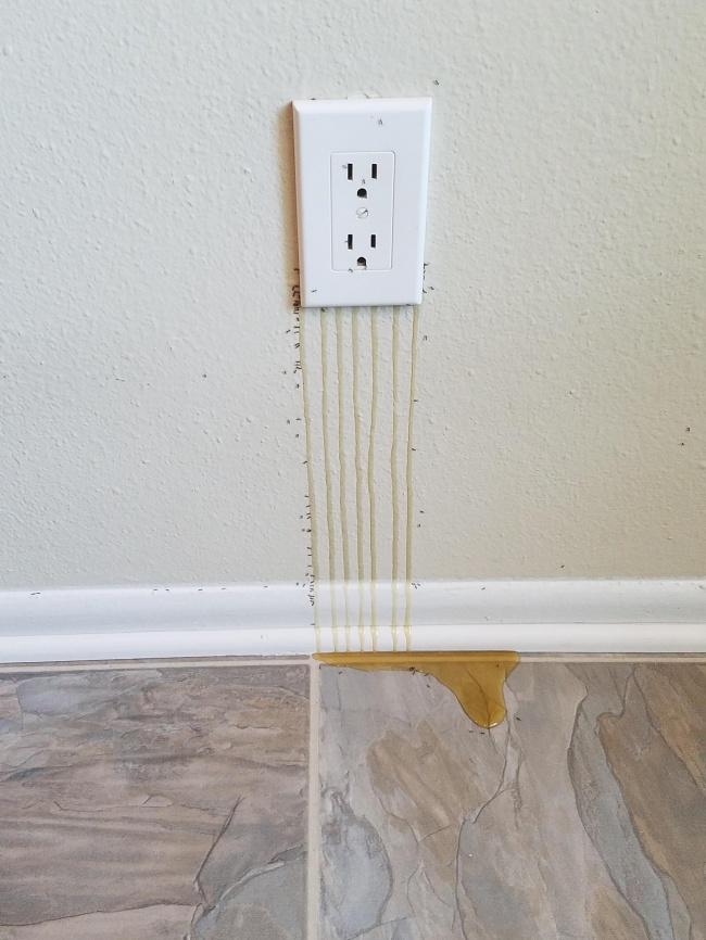 Saking begitu banyaknya lebah di balik tembok ini, sampai-sampai ada madu yang keluar dan menetes. Wah enak juga nih!
