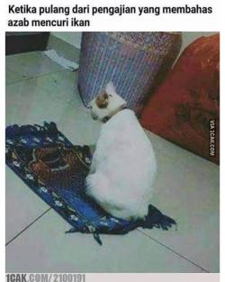 Kucing Diapa-apain Emang Lucu, Termasuk Dibikin 7 Meme Kocak Ini