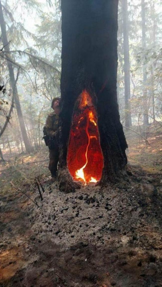 Api yang di pohon ini masih tetap menyala meskipun sudah lima hari berlalu.