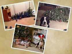 Momen Ngeselin Ketika Pohon Natal Dirumah Diacak-acak Hewan Peliharaan