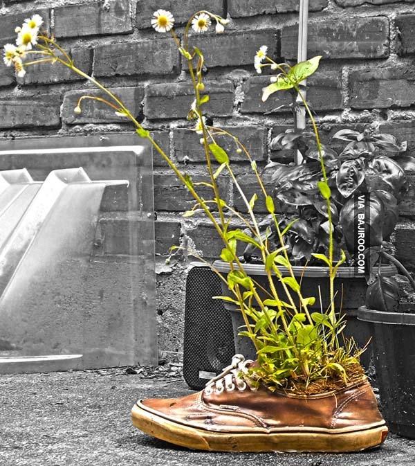 Ternyata bisa juga dijadikan pot bunga unik di halaman rumah.