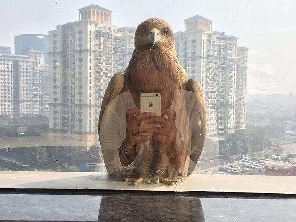 Orang yang foto burung atau burung yang foto orang.
