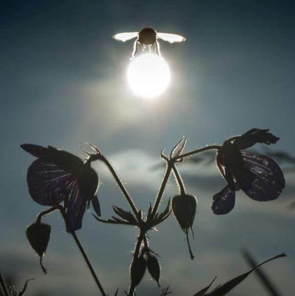 Wow kumbang ini hebat banget lho bisa mengangkat bulan.