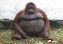 Pose Menggemaskan Hewan Chubby Saat Difoto, Jadi Pengen Bawa Pulang Deh !