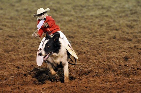 Jadi teringat gambar iklan rokok kalau ngeliat foto ini. Lucu juga ya gengs aksi mereka saat melakukan rodeo.