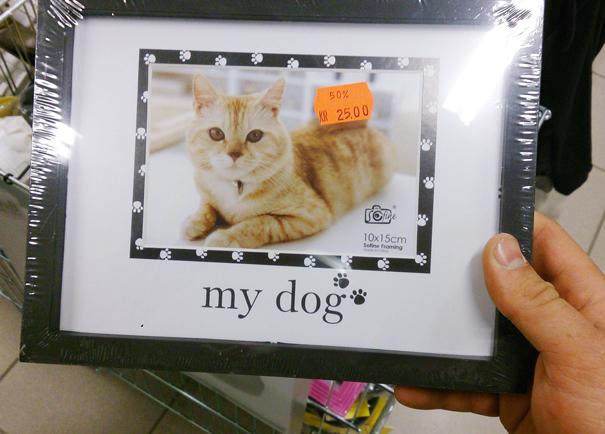 Anjingnya mirip kucing apa kucingnya mirip anjing?