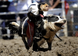 Foto Menggemaskan Aksi Monyet yang Melakukan Rodeo Bersama Anjing