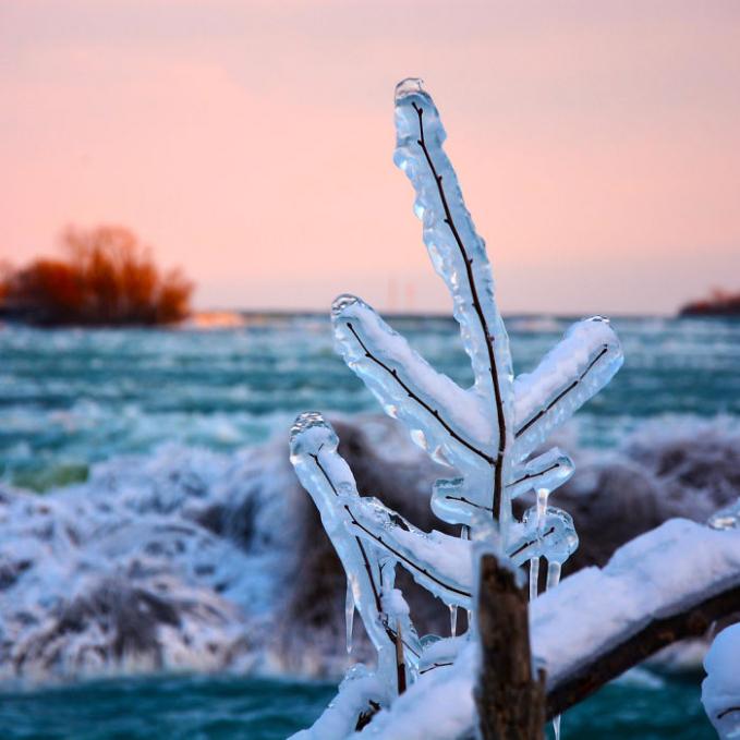 Tanaman disekitarnya pun juga tertutup es beku gengs.