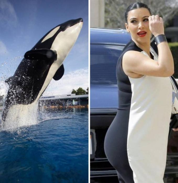 Kim Kardashian waktu lagi hamil terlihat mirip seperti seekor paus saat mengenakan baju hitam putih.