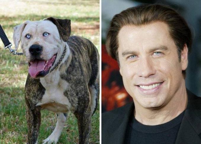 Kalau dari rahang sama raut mukanya sepintas mirip aktor kawakan John Travolta.