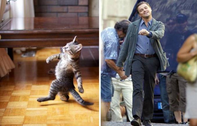Dengan santainya si kucing lucu ini bergaya ala Leonardo DiCaprio.