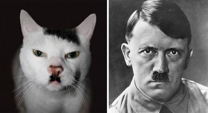 Punya kumis unik, si kucing digadang-gadang mirip dengan salah satu tokoh diktator dunia Adolf Hitler.