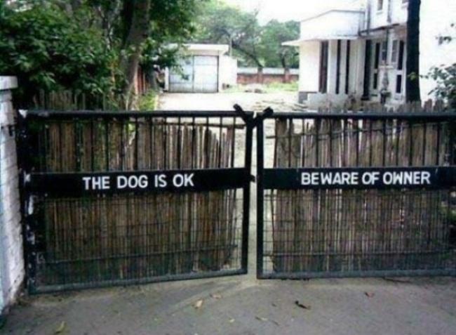 Anjingnya sih nggak masalah, tapi yang bermasalah pemiliknya gengs.