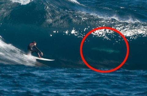 Hiu ini terlihat saat ombak menggulung di pantai buang kerap dijadikan tempat surfing bagi peselancar.