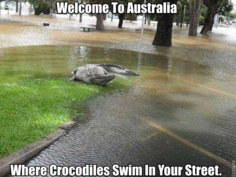 Selamat datang di Australia, dimana buaya bisa berenang di jalan raya.