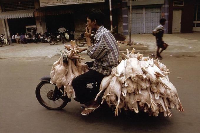 Geli juga ya lihat ayam digantung-gantung gini.