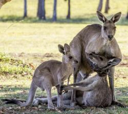 10 Foto Ekspresi Penuh Haru Ketika Hewan Ditinggal Mati Kerabatnya