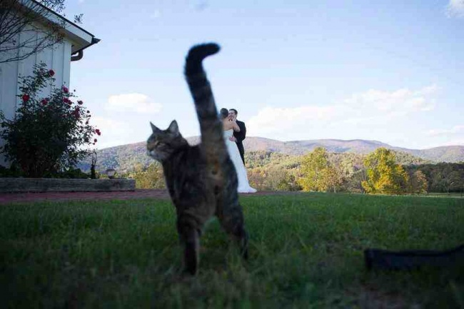 Si kucing nggak suka banget deh ngeliat momen romantis kedua mempelai saat foto prewedding.