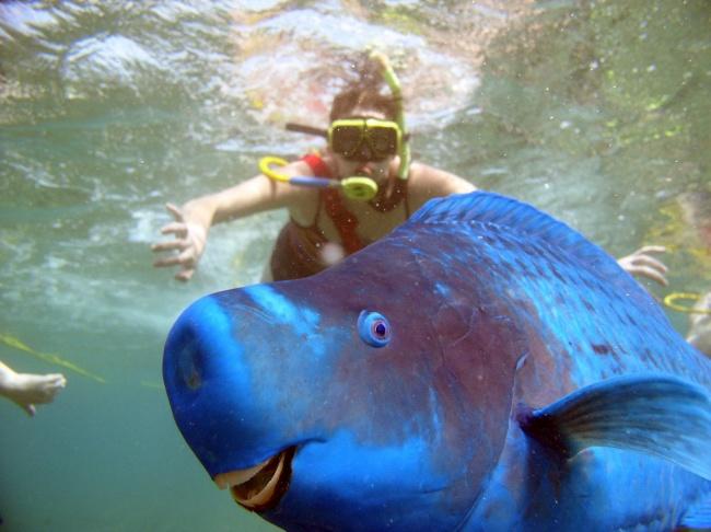 Hewan pun sadar kamera lho, si ikan ini contohnya yang nampak senyum-senyum saat dijepret kamera.
