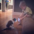 Saat Anak Kecil Bermain Bersama Hewan Peliharaannya..Lucu Banget!