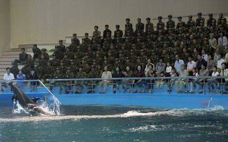 Di Korea Utara memotret binatang bukanlah sebuah larangan, tapi mengambil foto tentaranya adalah tindakan yang ilegal.