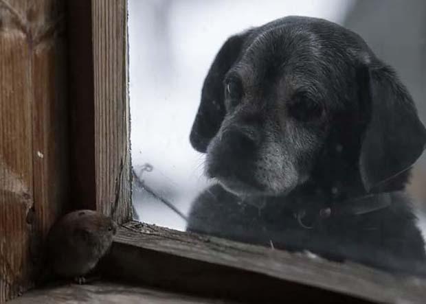 Si anjingnya nampak sedih banget tuh gengs lama menunggu sesuatu yang diharap-harapkan.