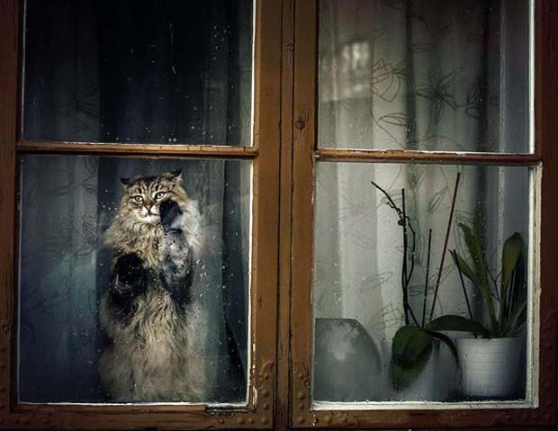 Nampak jelas nih kalau si kucingnya lagi galau menunggu ya Pulsker.