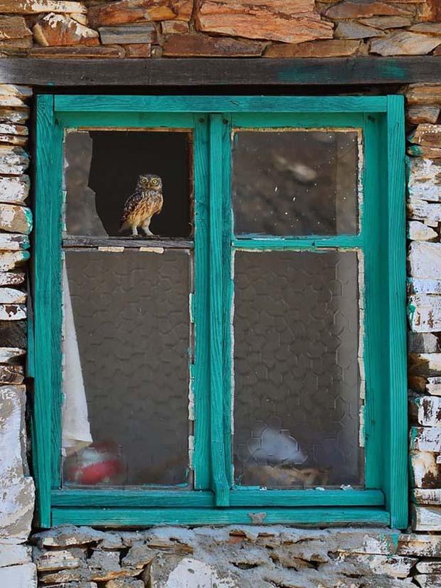 Menunggu sambil bertengger di jendela nggak papa kan guys?.