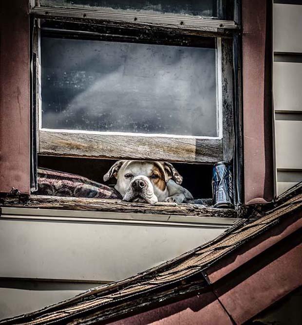Saking lucunya ekspresi anjingnya jadi pengen bawa pulang deh.