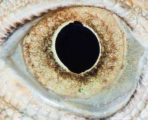 Ada yang tau ini mata hewan apa guys?.