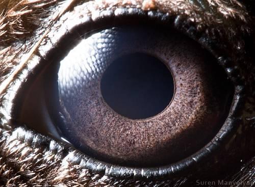 Mirip manusia juga sih sekilas mata bebek kalau diliat dari dekat.