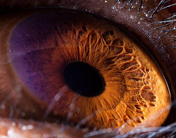 Mata simpanse berwarna cokelat dan juga hampir terlihat seperti mata manusia.