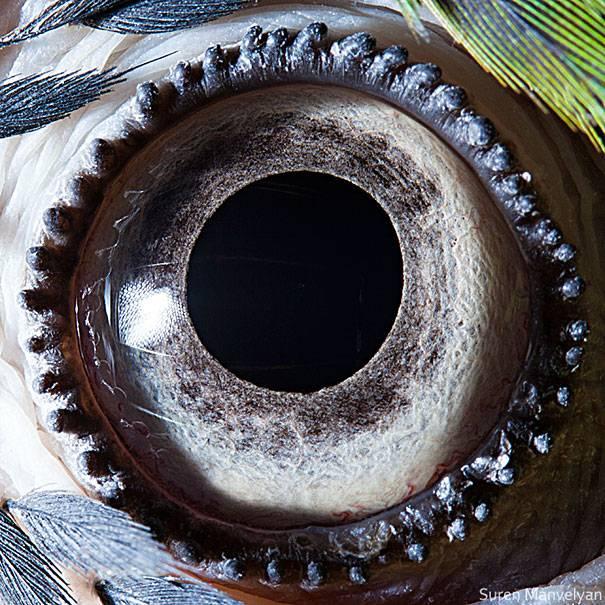 Bentuknya bulat sempurna dan mirip sebuah gir di pinggiran matanya, ini adalah mata burung macaw.