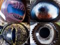 Penampakan Mata Hewan Kalau Di-zoom, Bisa Tebak Nggak Hewan Apa Aja?