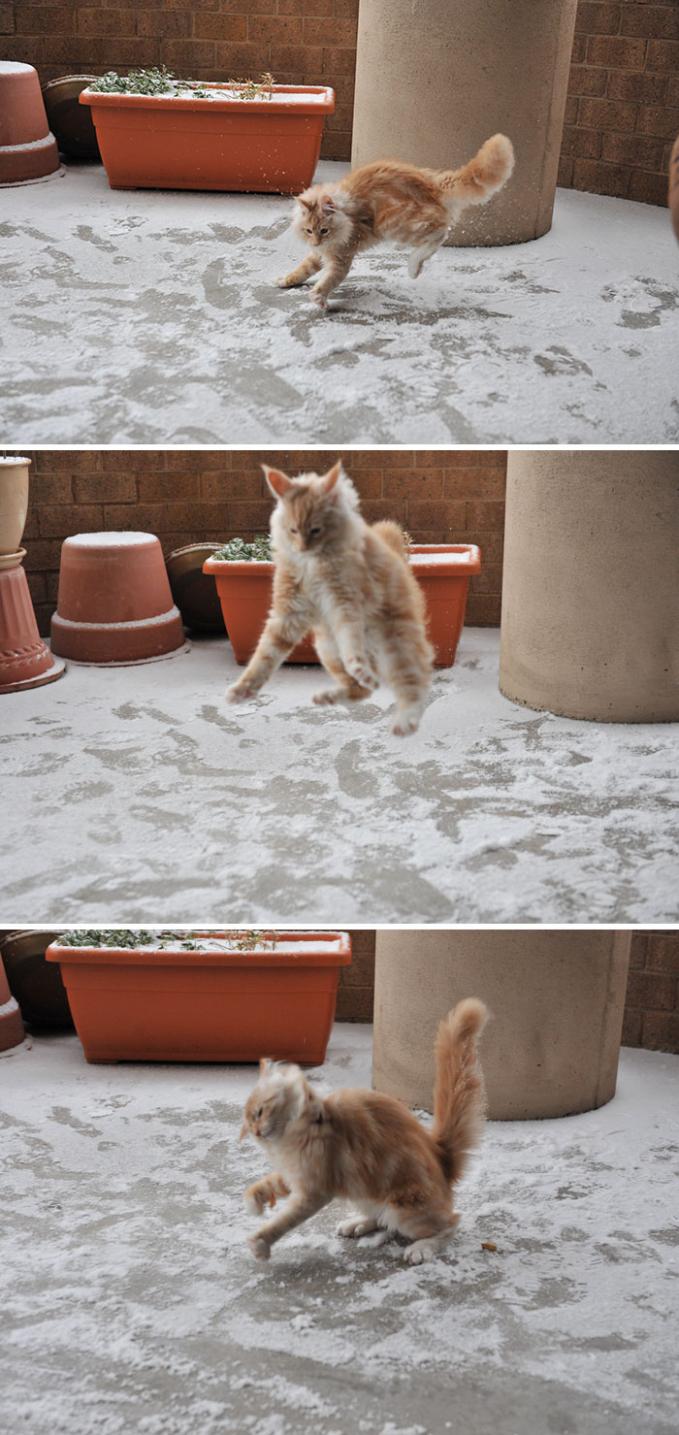 Awalnya, si kucing kaget dan nggak tau harus gimana. Tapi lama-lama udah terbiasa juga akhirnya.